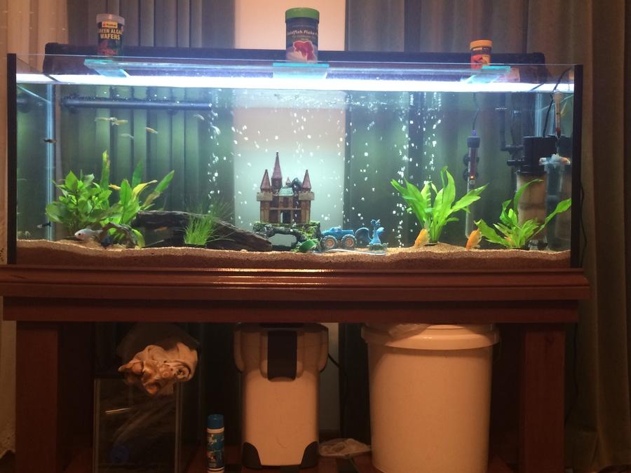 Info On 4ft Tank New Set Up My Aquarium Club