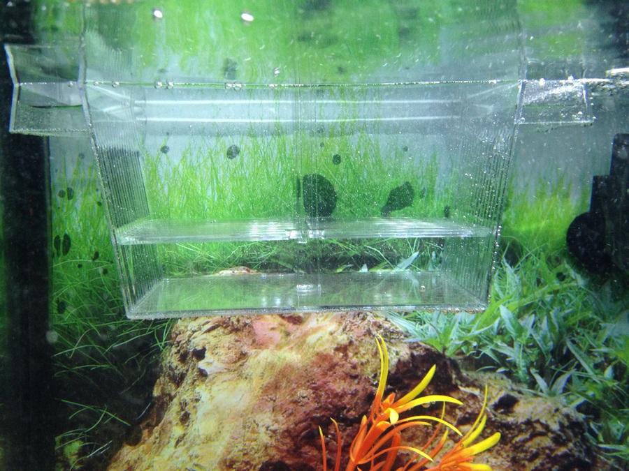 How Should I Use My 3 Way Breeder My Aquarium Club