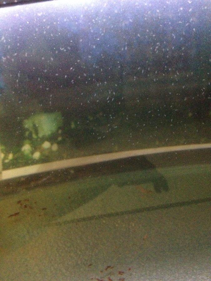 Very Small Tiny Worms On Glass | My Aquarium Club