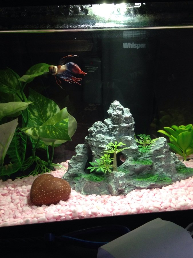 on Fish tank bottom white