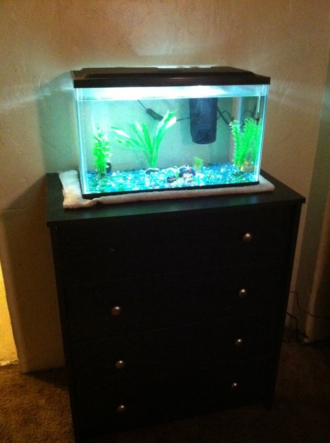 I Want To Put A Fish Tank On My Dresser 10 Gal Would It