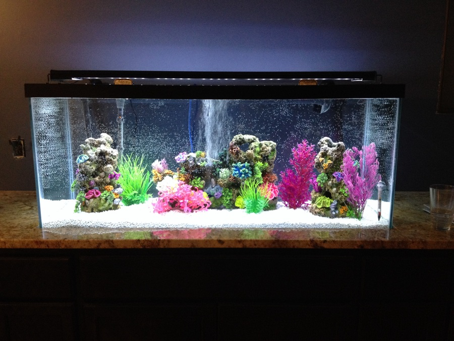 I am new to the fish community i just set up a brand new for New fish tank cloudy