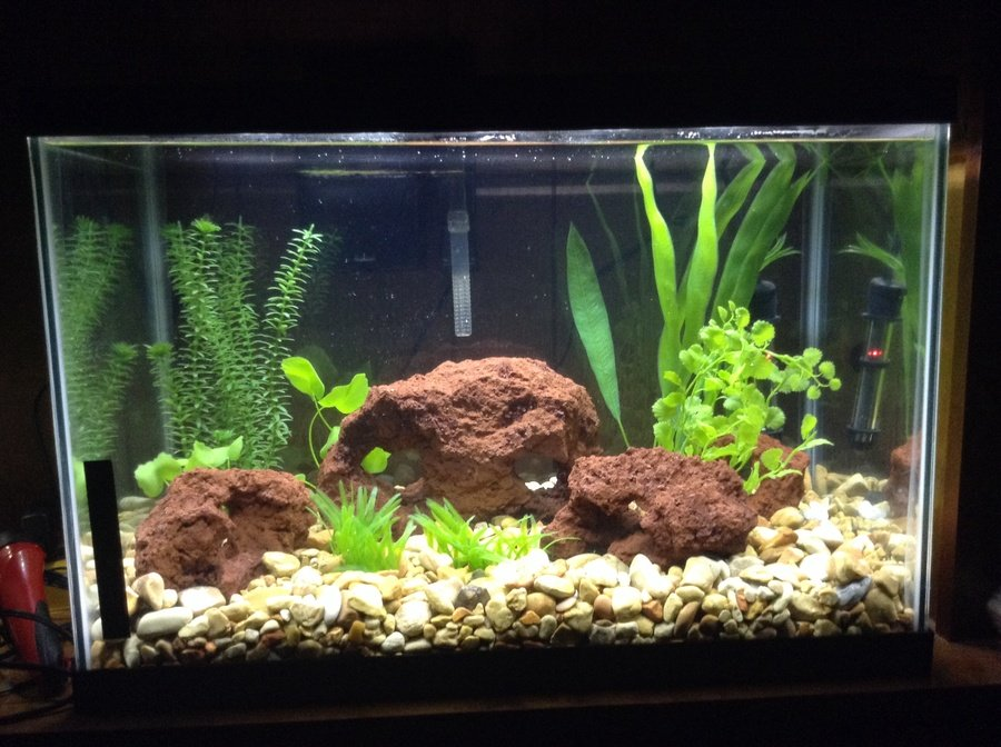 Fish to add with betta in my 20 gallon tank my aquarium club for Split fish tank