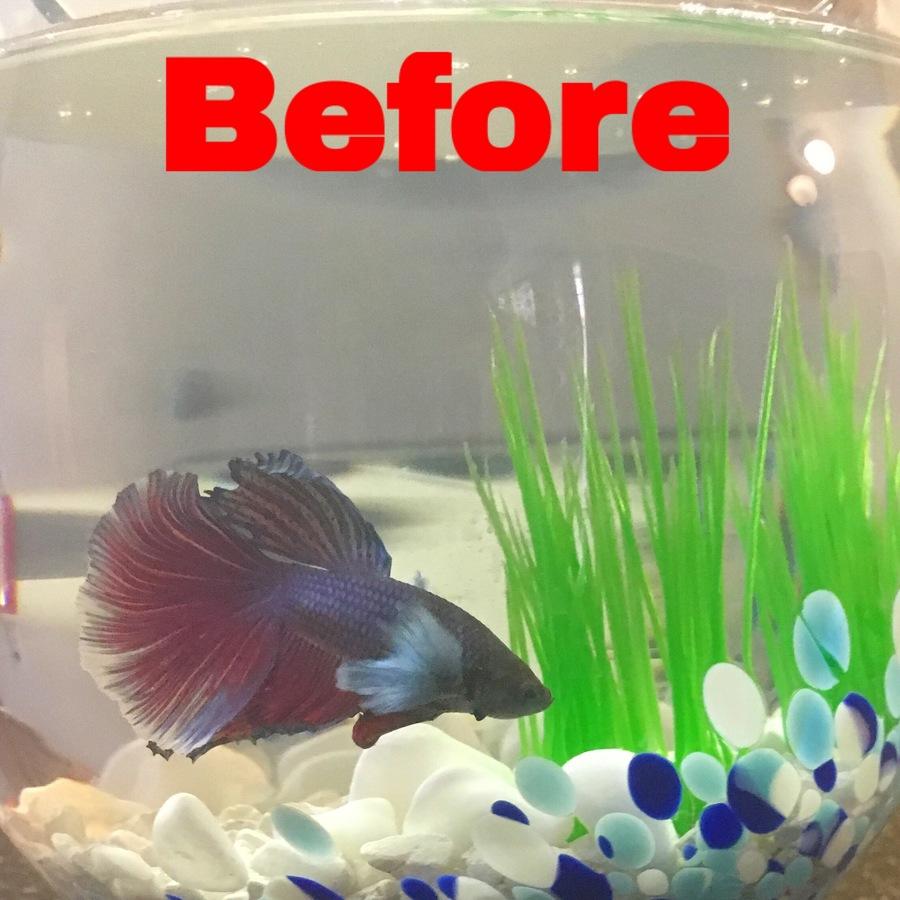 Betta Ripped His Fin, What Do I Do??? | My Aquarium Club