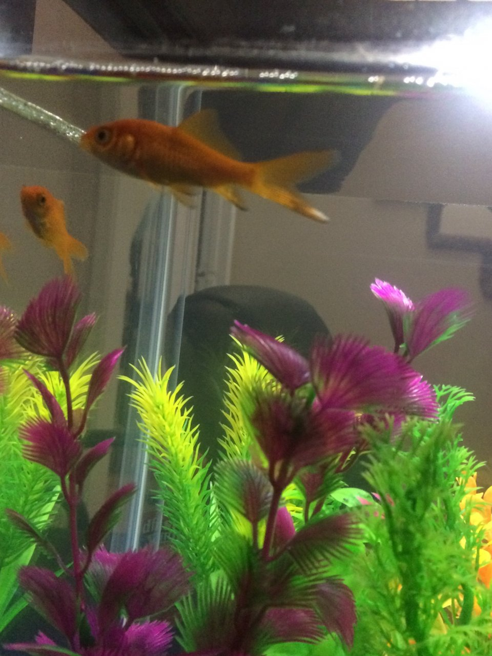 Ammonia Burns Or Changing Color/pigmentation *NEW FISH OWNER* | My ...
