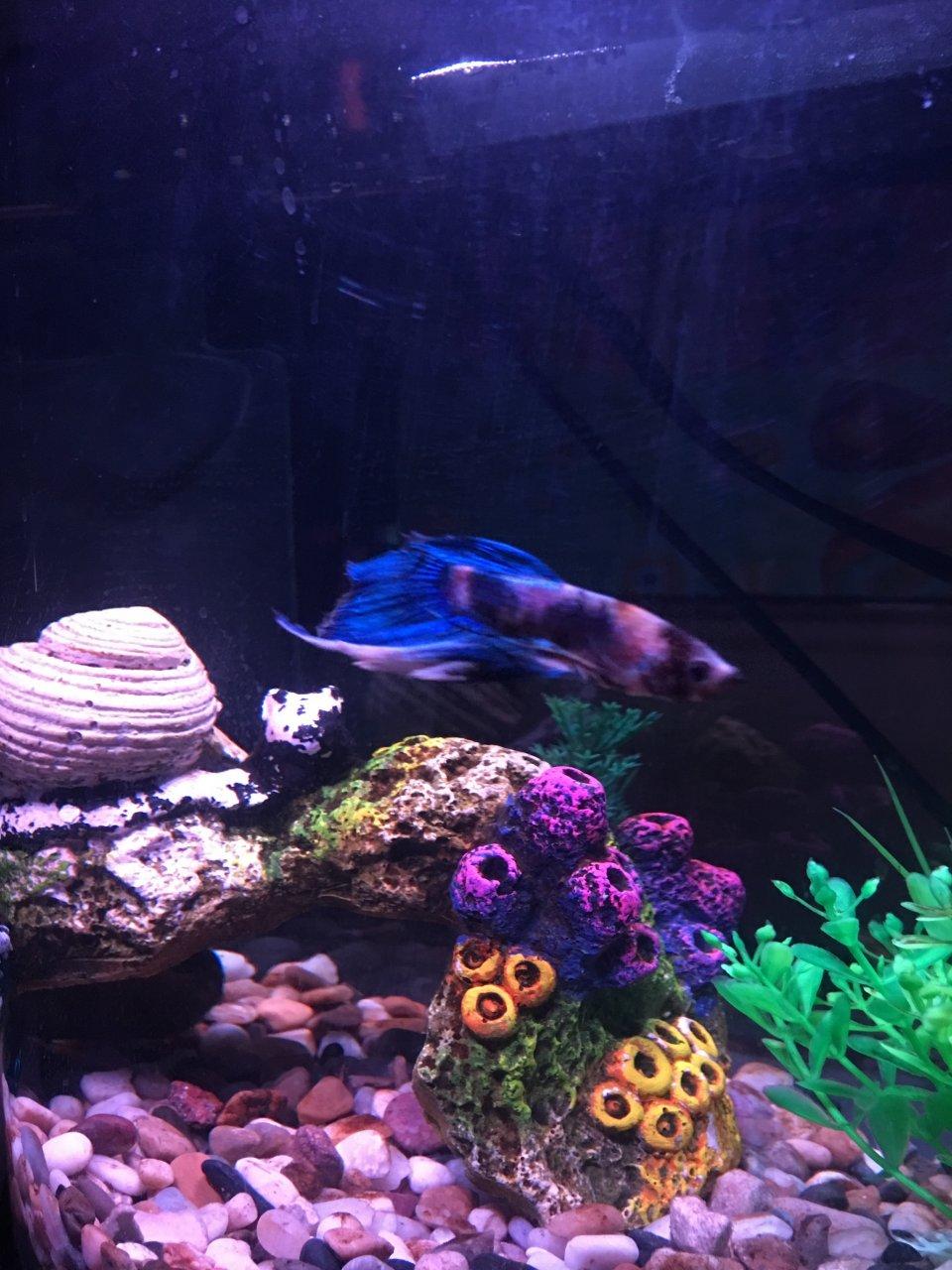 EXTREME Fin Rot   My Aquarium Club