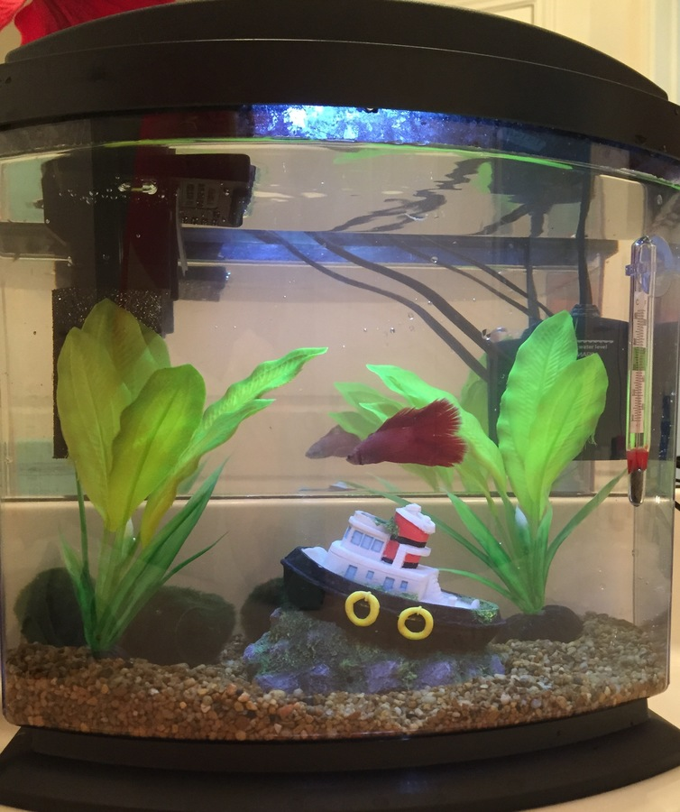 Is This A Good Betta Tank  2.5 G. Aqueon Mini Bow Desktop Aquarium ... 60f53a6b19a3