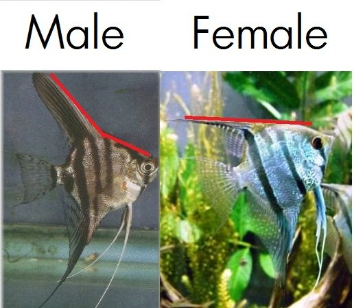 How Can You Tell The Difference Between A Male And Female -5436