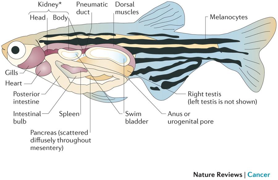 Fantastisch Fish Head Anatomy Bilder - Menschliche Anatomie Bilder ...