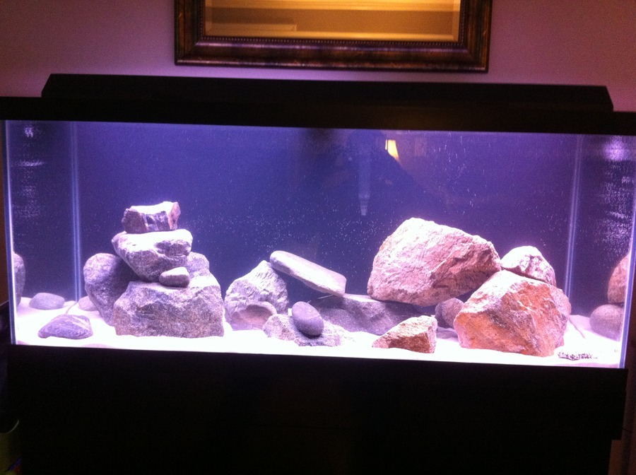 Mbuna Aquascaping | My Aquarium Club