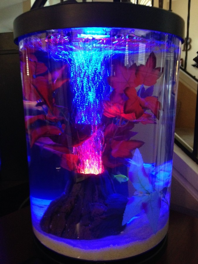 newbie neon tetras lighting feeding my aquarium club. Black Bedroom Furniture Sets. Home Design Ideas