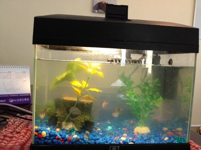What to do with an aquarium that is smaller than 5 gallons for Why is my fish tank water cloudy