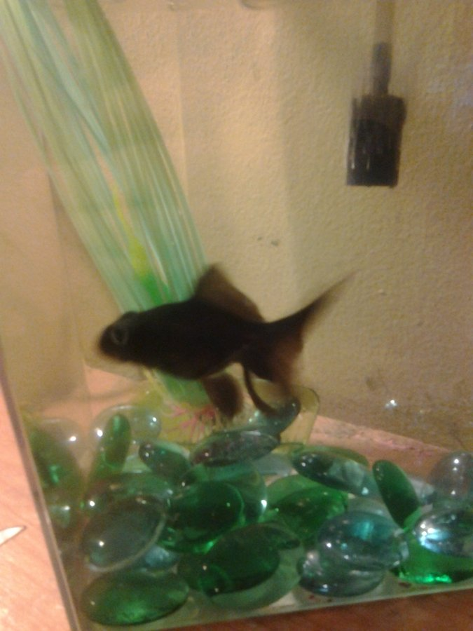 What Can I Feed My Goldfish Besides Fish Food