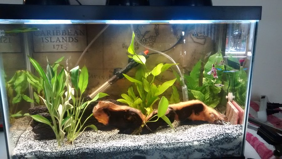 How To Reduce The Flow Rate Of A Filter My Aquarium Club