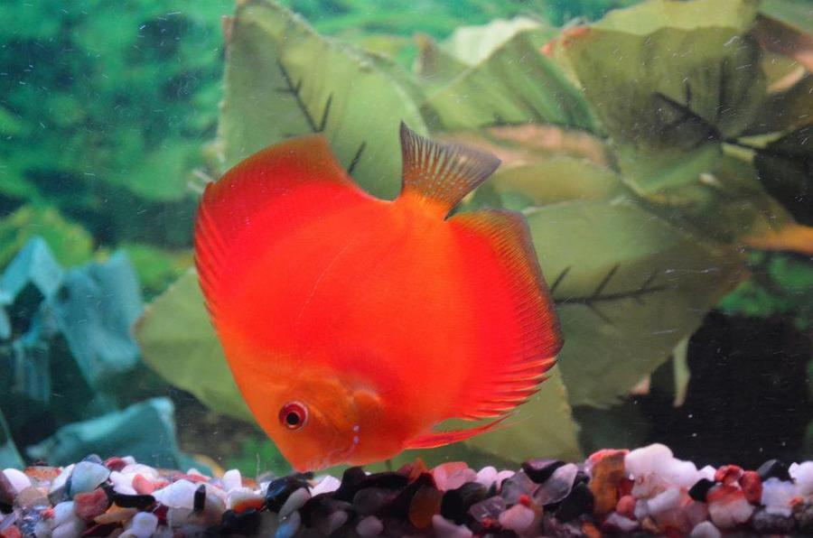 Complete Fish Compatibility List My Aquarium Club