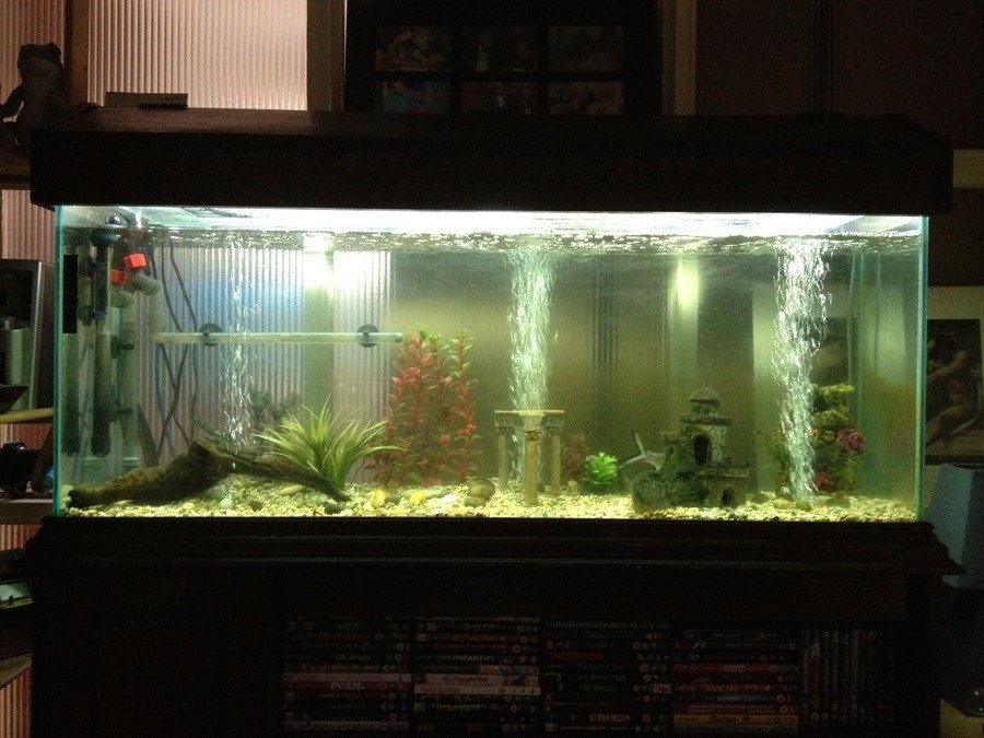 how to get rid of pond snails in fish tank