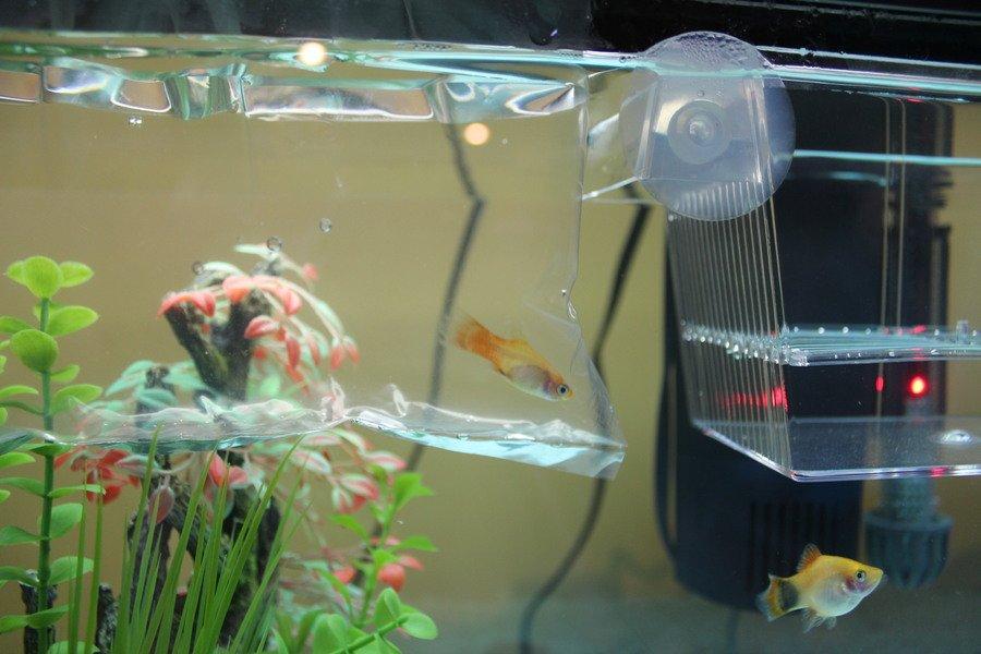 The Drip Acclimation Method My Aquarium Club
