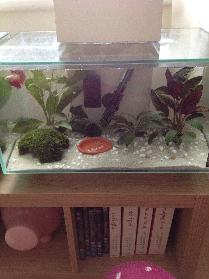 How Do I Set Up The Perfect Betta Tank My Aquarium Club