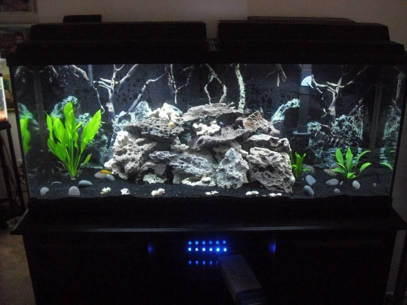 New setup on my 55 gal tang tank my aquarium club for 55 gallon fish tank setup
