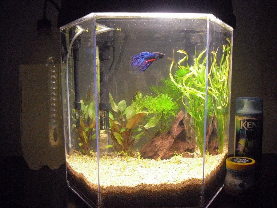 Eclipse 5 gallon hex my aquarium club for Eclipse fish tank